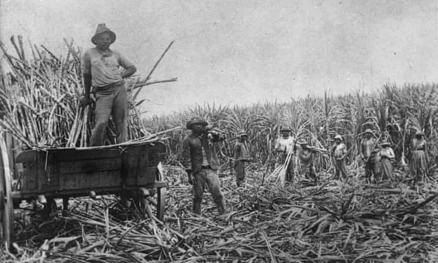 South Sea Islander labourers loading cut sugar cane into a wagon Queensland.