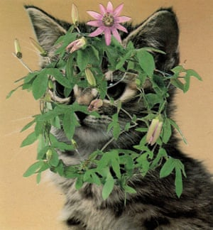 A collage of a cat with plants on its head by Stephen Eichhorn