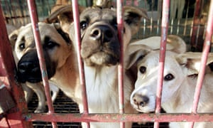 Dogs are kept in a cage before they are slaughtered in Seongnam in South Korea.