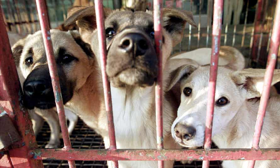Dogs waiting to be sold at a market in South Korea