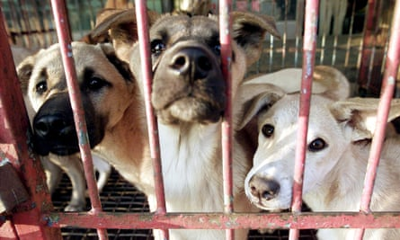 Dogs are kept in a cage waiting to be sold at a dog meat shop in Songnam, about 50 km (30 miles) south of Seoul.