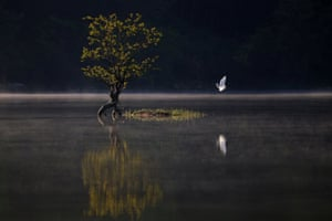 An egret flies over the Qishu Lake in Huangshan, east China's Anhui Province