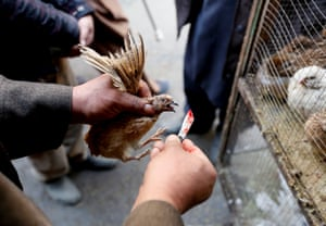 A vendor prepares to kill a quail for a customer