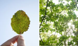 A beech leaf, and sycamore branches.
