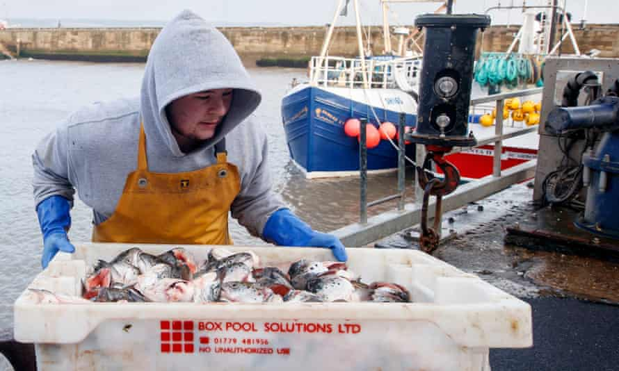 Fishing bait is unloaded at Bridlington harbour in East Yorkshire.