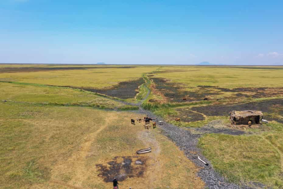Livestock graze by abandoned canoes on the dry bed of Lake Chilwa, October 2020