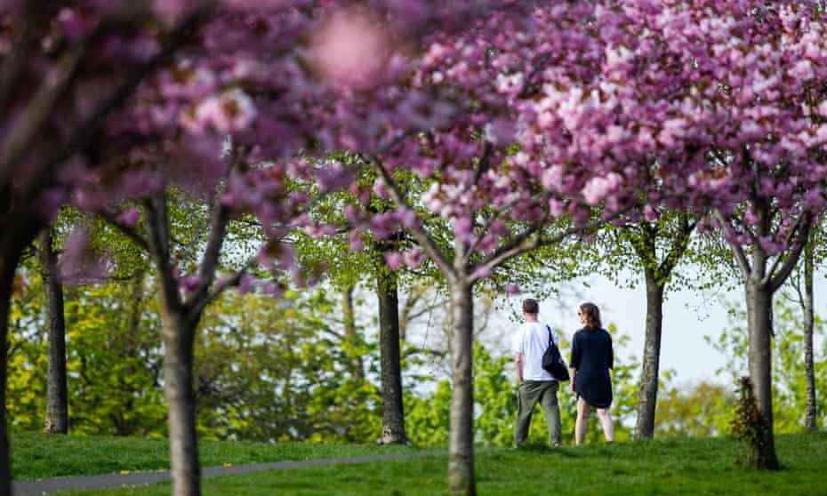 A couple walk through pink cherry blossom trees in Queen's Park