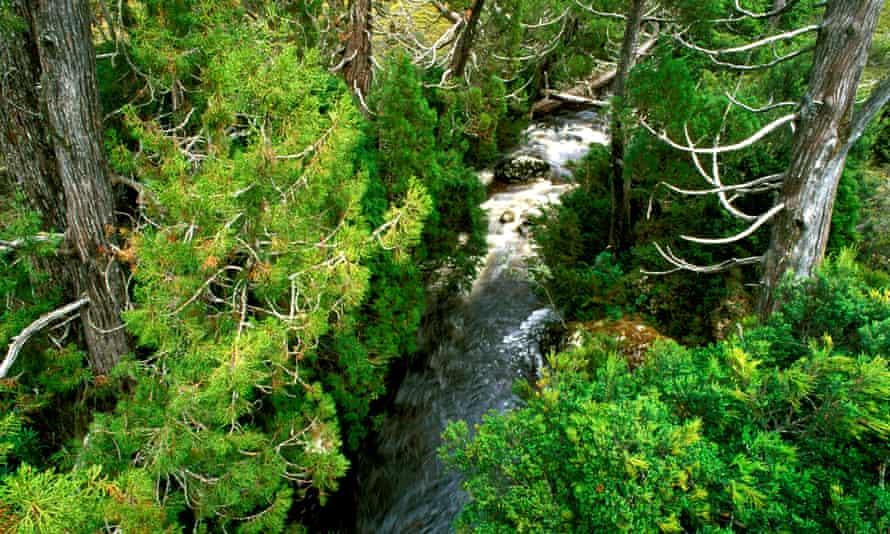 File photo of Dove River and pencil pines in Tasmania, Australia