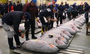 Buyers inspect frozen tuna at Tsukiji wholesale fish market on Thursday.