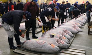Buyers inspect frozen tuna at a wholesale fish market in Tokyo