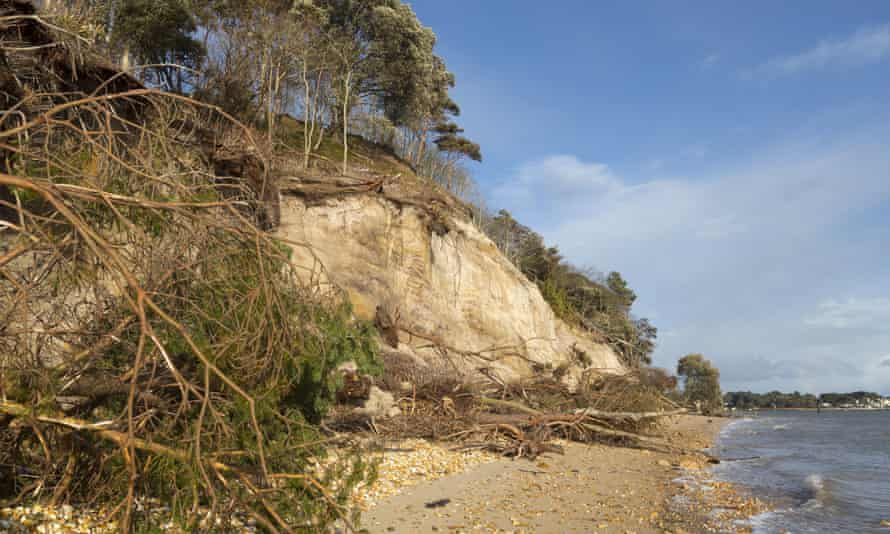 Storm-damaged cliffs and beach on the south shore of Brownsea Island, owned by the National Trust, in Dorset.