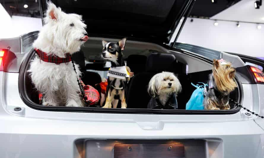 Dogs in the back of a car. Illinois is making it a misdemeanour to leave a pet outside in extreme temperatures.