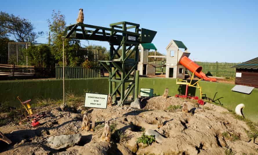 The meerkats' enclosure.