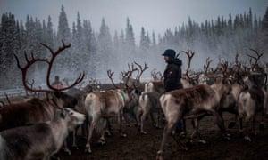 Sami woman with reindeer