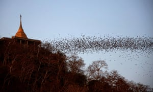 Bats fly out of the cave at Wat Khao Chong Phran in Ratchaburi, Thailand on 13 March.