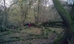 Pickworth Great Wood