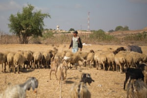 A Palestinian shepherd tends his sheep in the northern Gaza Strip