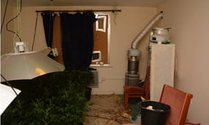 A cannabis factory was found inside the home of Royal Navy veteran Nicholas Clark.
