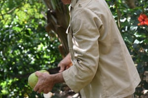 Organic farmer Agusti'n Pimentel uses a machete to slice open a coconut on his organic farm in a remote valley in western Cuba. He bottles and sells coconut milk to a local cooperative.