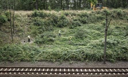 Workers clear vegetation from the site near Wałbrzych, Poland