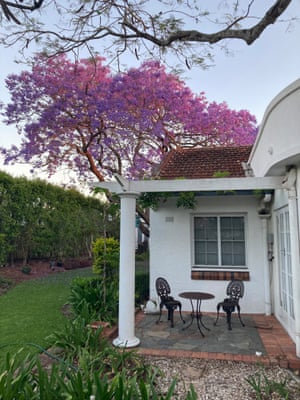 A family's 80-year-old jacaranda tree at their home in Brisbane.