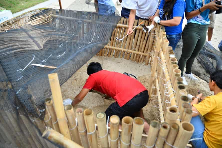 Protecting the nests on Koh Samui