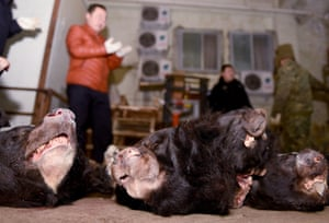 Chinese police officers check body parts of wild animals seized during a raid on traffickers in Mianyang City, Sichuan province, China