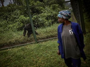 Rehema Lushombo stands in front of a chimpanzee at Lwiro Primate Centre. Lushombo, a caretaker who works with chimpanzees too old for regular direct human contact, says: 'Our job is to create good relations with them, they've been in hazardous situations, poachers have killed their families in front of their eyes and caught them, they fear people. When I notice any sickness or problem I inform the veterinarian ... we enter the cage in a group to treat them'