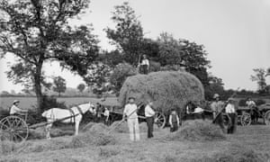 Pastoral life … haymaking near Byfield, Northamptonshire in 1908.