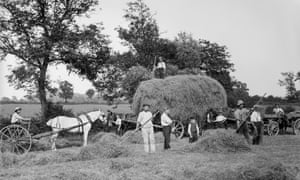 Haymaking near Byfield, Northamptonshire, 1908.