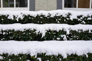 A triple-layered miniature hedge in front of mews houses in St Stephen's street in Stockbridge.