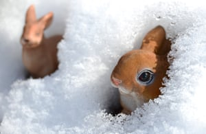 Easter bunnies in the snow.