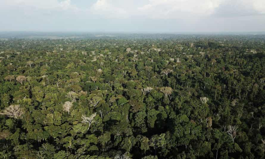 Trees such as those in the warm climate of the Amazon rainforest in Brazil live fast and die young, but the principle is true across all latitudes, according to research.