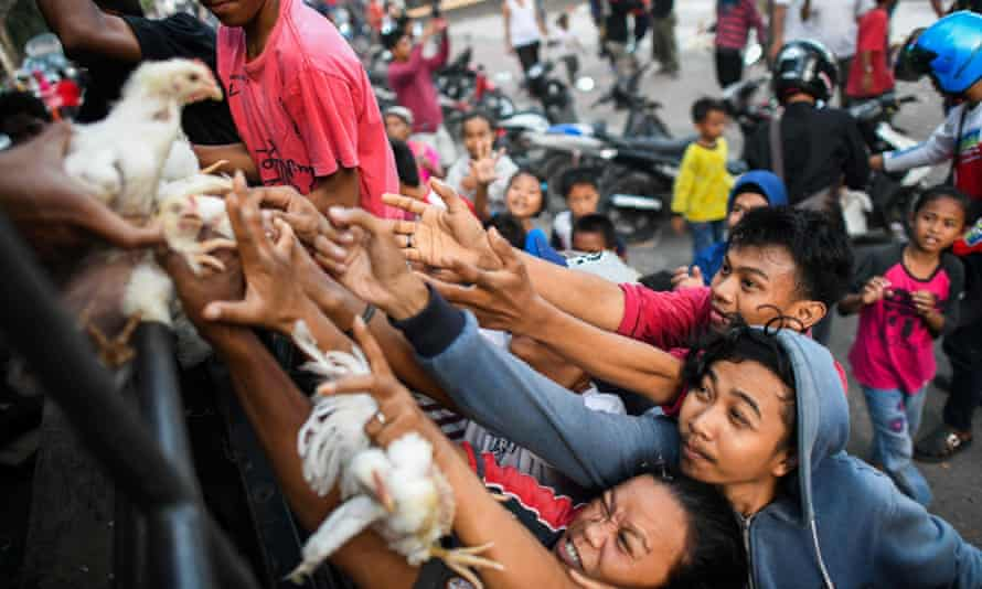 Quake survivors scuffle to get live chickens being distributed from a police truck outside a makeshift camp in Palu.