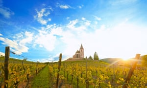 A vineyard in Alsace
