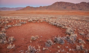 """The """"fairy circles"""" of the Namib desert, which can grown to 25 metres wide."""