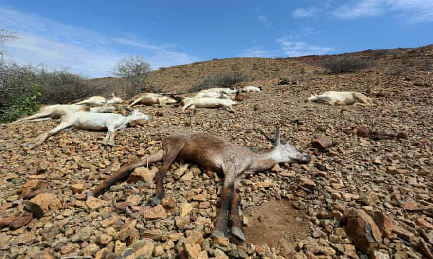 Across the Horn of Africa, millions have been hit by the severe El Niño-related drought. The region is among those projected to take a big hit to GDP by 2050 because of water scarcity.