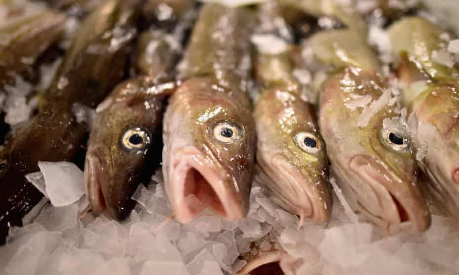 Cod on display to be sold at Peterhead fish market