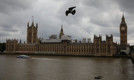 Birds fly past the Houses of Parliament