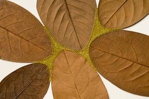 Common Ground lll, a leaf sculpture by Susanna Bauer