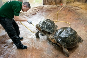 Martin Franklin showers the Galapagos tortoises