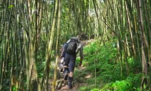 Uganda Rwenzori Bamboo Zone