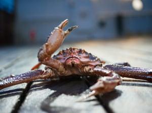 Crustacean Resistance 2017