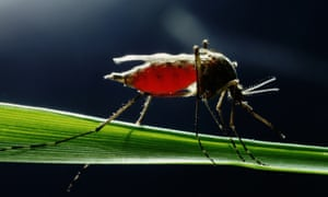 Mosquito-borne diseases such as dengue fever, malaria and chikungunya infect millions of people each year worldwide.