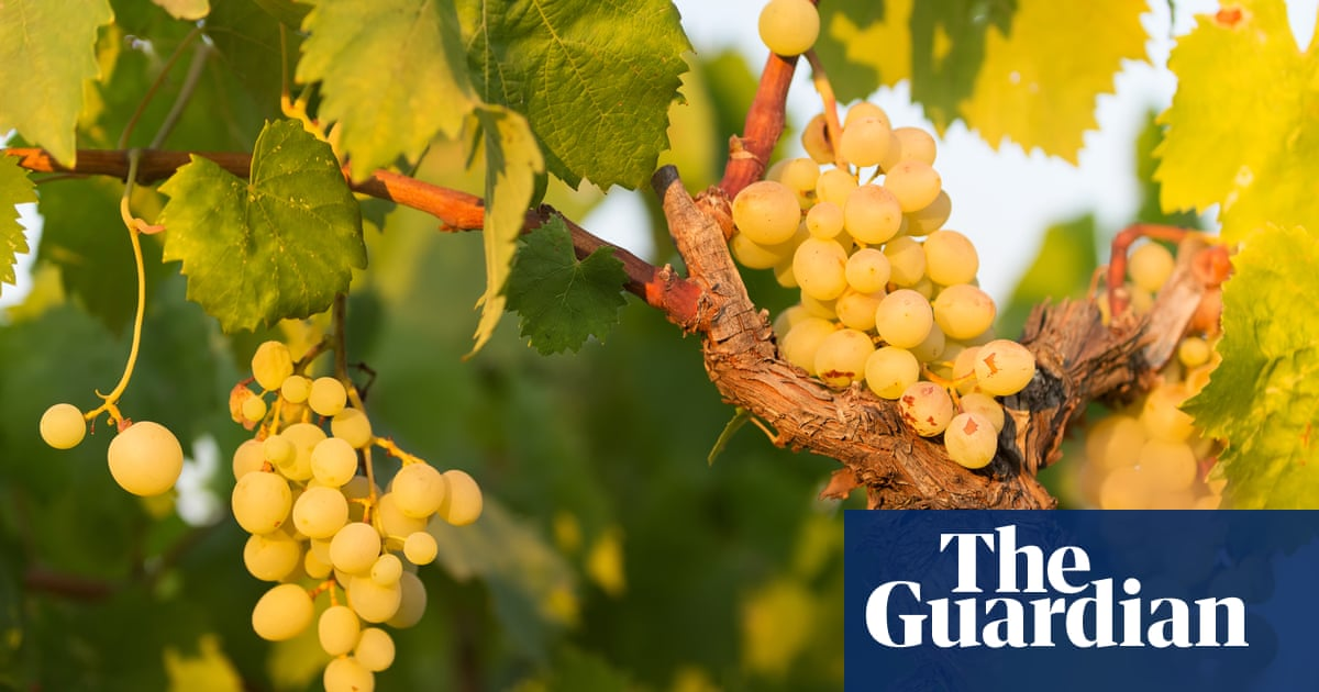 Why France's well-travelled grapes conquered the world