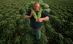 Farmer gathers sprouts