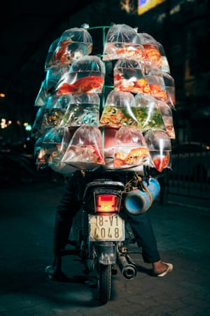 A delivery driver on a motorbike in Hanoi, Vietnam, carrying live fish in bags