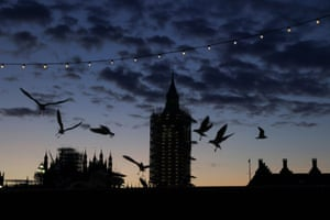 Gulls fly around the UK parliament building during sunset