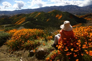 A woman takes in the view of wild poppies blanketing the hills of Walker Canyon