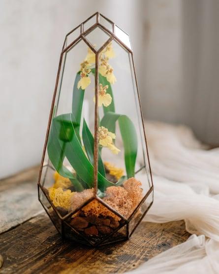 Tiny tender: a dwarf orchid in a terrarium.